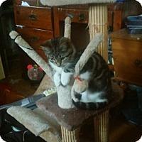 Adopt A Pet :: Holly - Aurora, IL