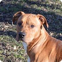 Adopt A Pet :: Murphy - Ashtabula, OH