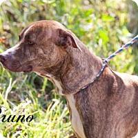 Adopt A Pet :: Bruno - Middleburg, FL
