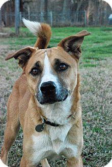 Shepherd (Unknown Type)/Spitz (Unknown Type, Medium) Mix Dog for adoption in Greensboro, Georgia - McKinley