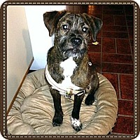 Adopt A Pet :: Jasmine - Marlton, NJ