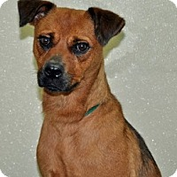 Adopt A Pet :: Bailey - Port Washington, NY