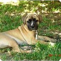 Adopt A Pet :: Portia - Lodi, CA