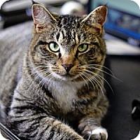 Adopt A Pet :: Macy - Athens, GA