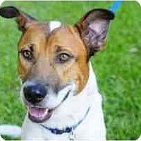 Adopt A Pet :: Drake - in Maine-Pending! - kennebunkport, ME