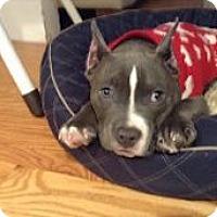 Adopt A Pet :: Rocky - Framingham, MA