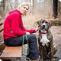 Adopt A Pet :: Moses - Tinton Falls, NJ