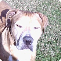 Adopt A Pet :: Rocky - Ocean Ridge, FL