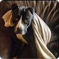 Adopt A Pet :: Reese - Huntington Beach, CA