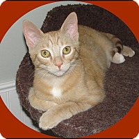Adopt A Pet :: Toews - Mt. Prospect, IL