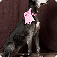 Adopt A Pet :: Ruthie - Springfield, IL