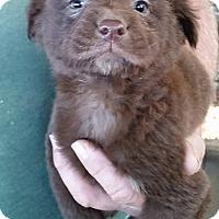 Adopt A Pet :: Twizzler - Gainesville, FL