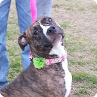 Adopt A Pet :: NETTIE - Wilmington, NC