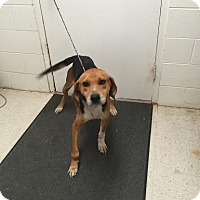 Adopt A Pet :: Tommy - Lancaster, VA