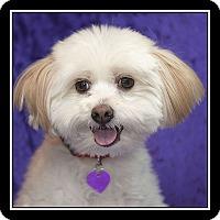 Adopt A Pet :: GUS - San Dimas, CA