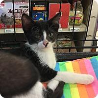 Adopt A Pet :: Destiny - Gilbert, AZ
