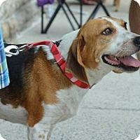 Adopt A Pet :: Pumpkin - Willingboro, NJ