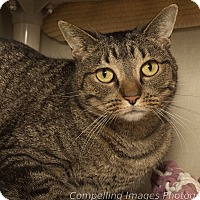 Adopt A Pet :: Adriena - Fort Collins, CO