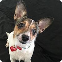 Adopt A Pet :: GinGin - Los Angeles, CA