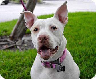 Terrier (Unknown Type, Medium) Mix Dog for adoption in Plant City, Florida - Polar