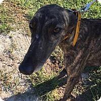 Adopt A Pet :: Gardens aka Lake Henry - Gainesville, FL