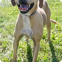Adopt A Pet :: PENNY - Sandusky, OH