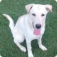 Adopt A Pet :: Sasha - Plano, TX
