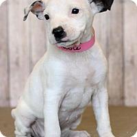 Adopt A Pet :: Flossy - Waldorf, MD