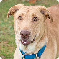 Adopt A Pet :: Maxx - Westfield, NY