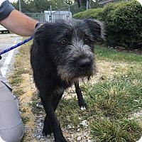 Adopt A Pet :: Bosco - Sagaponack, NY