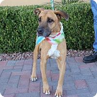 Adopt A Pet :: SCOOBY DOO - Las Vegas, NV