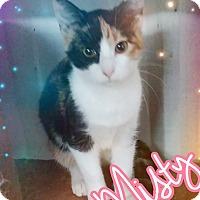 Adopt A Pet :: Misty - Odessa, TX