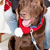 Adopt A Pet :: Hershey - San Francisco, CA