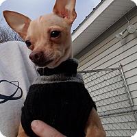 Adopt A Pet :: Clyde - Gloversville, NY