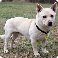 Adopt A Pet :: Wayne - Waldorf, MD