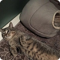 Adopt A Pet :: Leland - Eureka, CA