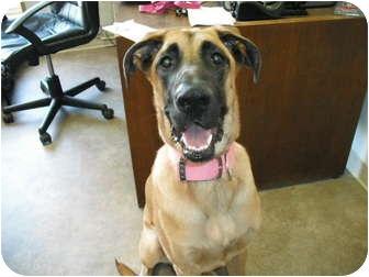 Great Dane/German Shepherd Dog Mix Dog for adoption in Rock Springs ...