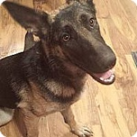 Adopt A Pet :: Tasha - Atascadero, CA