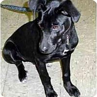 Adopt A Pet :: LUCAS - dewey, AZ