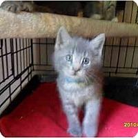 Adopt A Pet :: Grayson - Frenchtown, NJ
