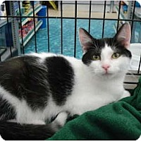 Adopt A Pet :: Jerry - Sterling Hgts, MI