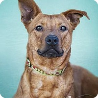 Adopt A Pet :: APPLE JACKS - Phoenix, AZ