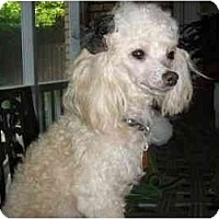 Adopt A Pet :: Sally - Mooy, AL