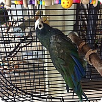 Adopt A Pet :: Ernie - Punta Gorda, FL