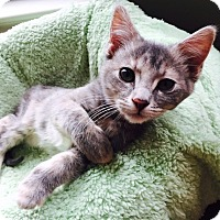 Adopt A Pet :: Lolo - St. Louis, MO