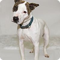 Adopt A Pet :: Tank - Lake Charles, LA
