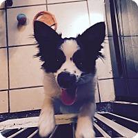 Adopt A Pet :: Steve - South Amboy, NJ