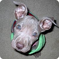 Adopt A Pet :: Wendy 2015 (m/c) - Chesterfield, MI