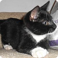 Adopt A Pet :: Tristan - Chattanooga, TN