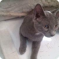 Adopt A Pet :: Rose - Berkeley Hts, NJ